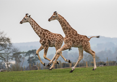 Admission Tickets Include West Midland Safari Park
