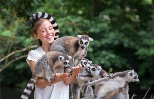 Lemur-Feed-01