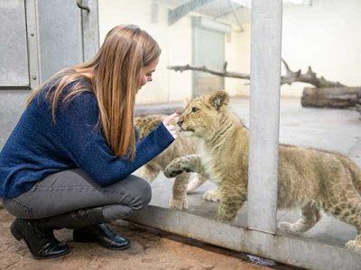 Lion-Cub-VIP-07