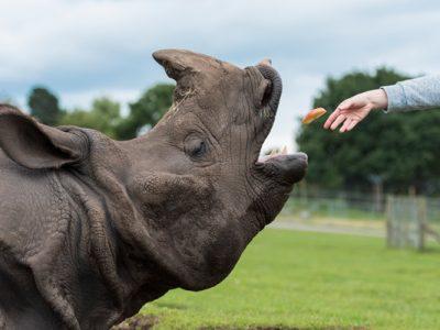 Rhino-Feed-05