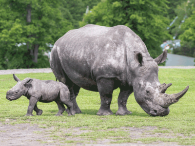The-rhino-lodges-will-be-the-only-experience-of-its-kind-in-the-UK-with-white-rhino