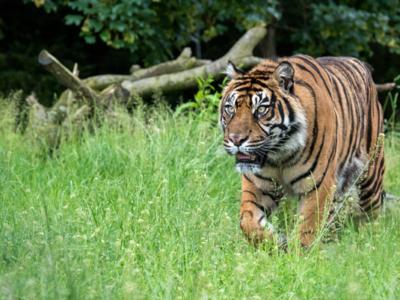 Tiger-lodges-01-600