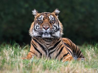 Tiger-lodges-02-600
