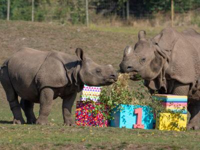WMSP-Baby-Rhino-Inesh-(1st-Birthday)-01-small