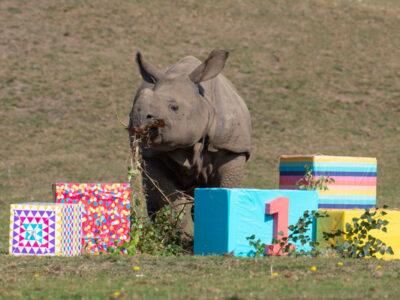 WMSP-Baby-Rhino-Inesh-(1st-Birthday)-02-small