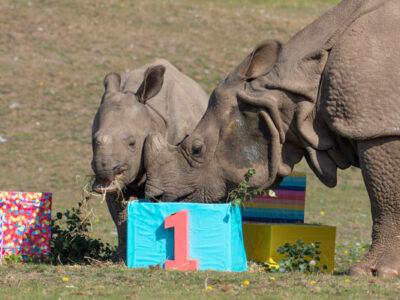 WMSP-Baby-Rhino-Inesh-(1st-Birthday)-03-small