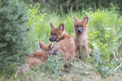 The pups have been named after three of their keepers – Huw, Harry and Holly.