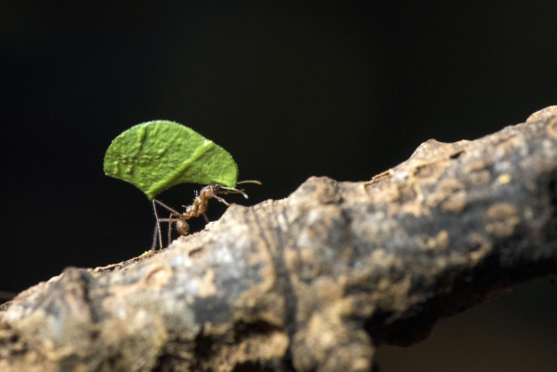 ant video downloader for safari