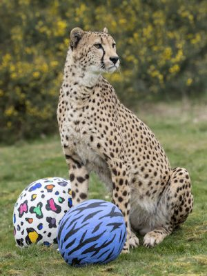WMSP Easter Cheetah 18-04-19 pic1 copy
