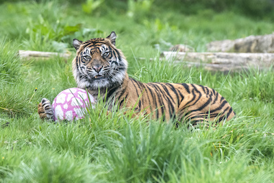 WMSP Easter Tiger 18-04-19 pic1 copy