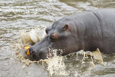 WMSP Halloween Hippos 31-10-19 pic5 copy