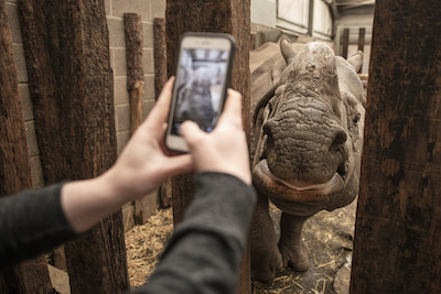 Guests donating to the Park's JustGiving page, will be entered into a prize draw for a special VIP Rhino experience.