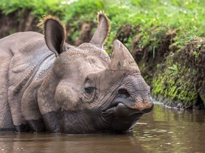 photo-safari-indianrhino-600px