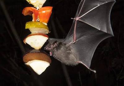 protect-bats-400px