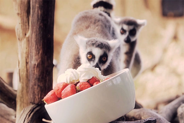 LEMUR FEED PROPOSAL EXPERIENCE